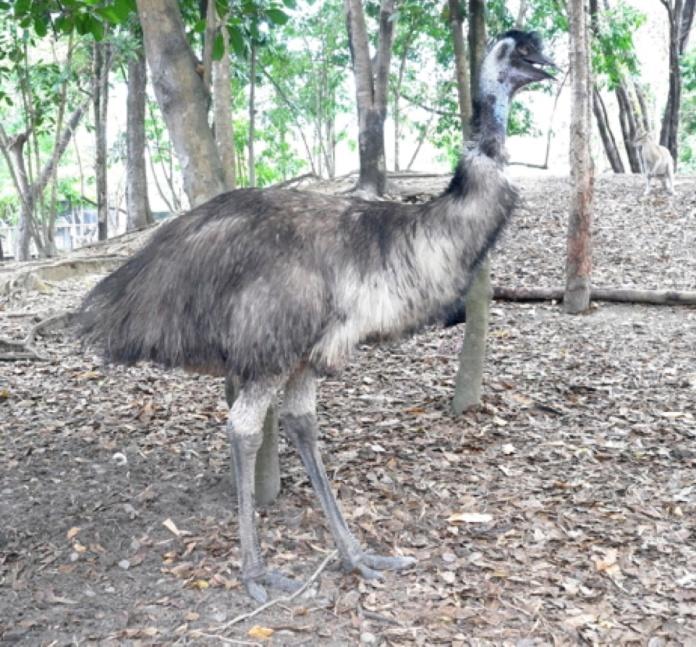 13-EMU