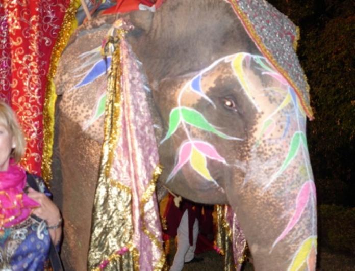 14-ELEPHANT