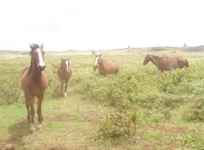 16-HORSES 2