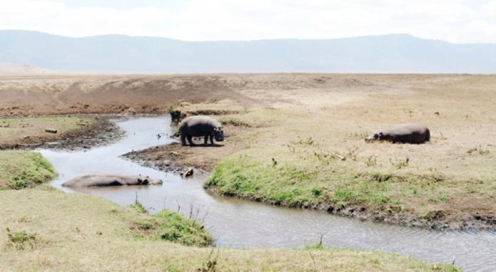18-HIPPOS
